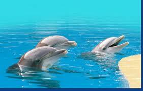 Delfinario Zoo Safari Fasano